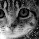 Place Kitten ;)